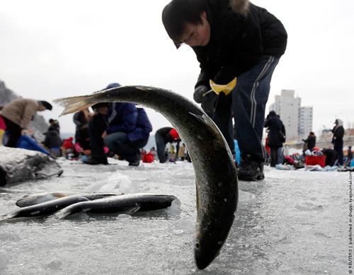 Китайский рыболовный фестиваль