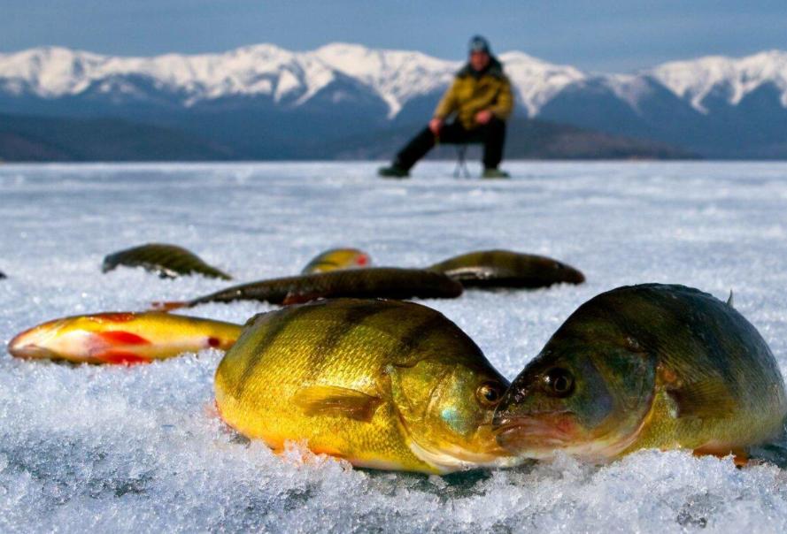 «Твоя Рыбалка»