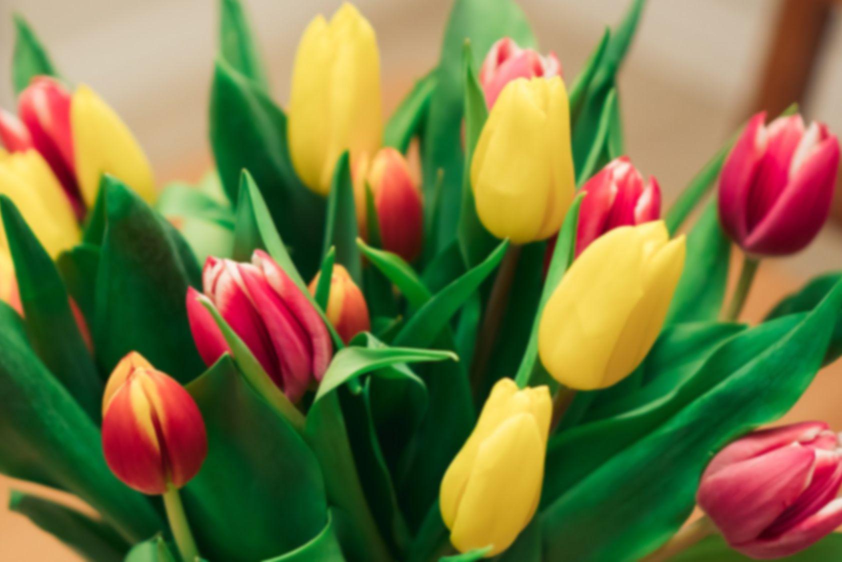 Цветы. Букеты из тюльпанов
